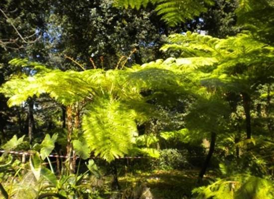 Porte aperte all'Orto Botanico, primo viaggio un weekend green