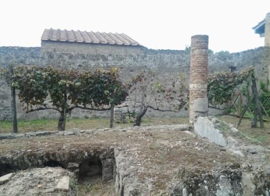 Pompei, nasce l'Orto didattico studenti coltiveranno cipolle, orzo e uva con antiche tecniche