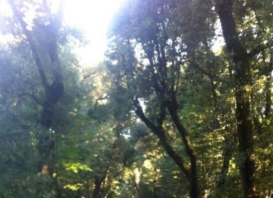 A Napoli gli alberi li piantano gli studenti