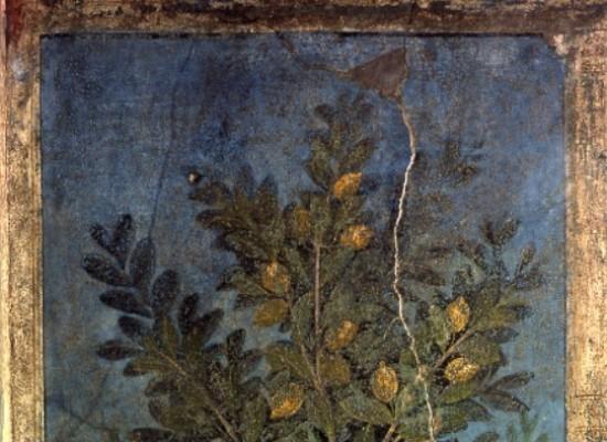 Pompei svela i limoni e le arance archeologiche