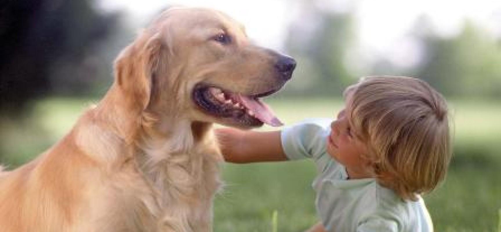 Pet Therapy, Medici, veterinari e psicologi cercasi per diventare Zoo terapeuti