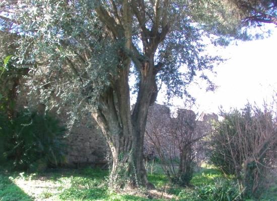 Pompei, in quindici anni stanziati 150 milioni di euro