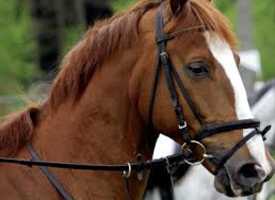 Equitazione, a Napoli Moneta e Moyerson