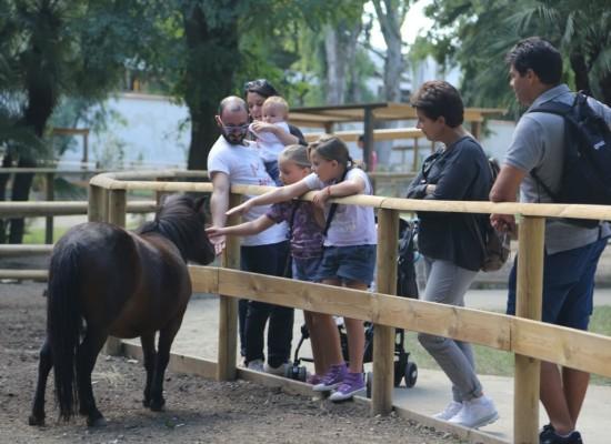 Zoo Napoli, sono arrivati i tapiri  e si festeggia