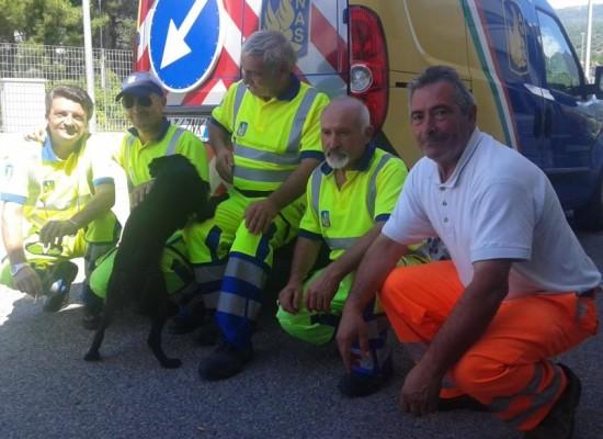 Cantonieri A3 salvano 'Nerone', appello all'adozione del cane abbandonato
