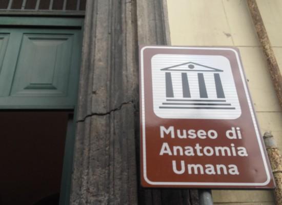 Museo anatomico, Riappare il teschio di Giuditta Guastamacchia