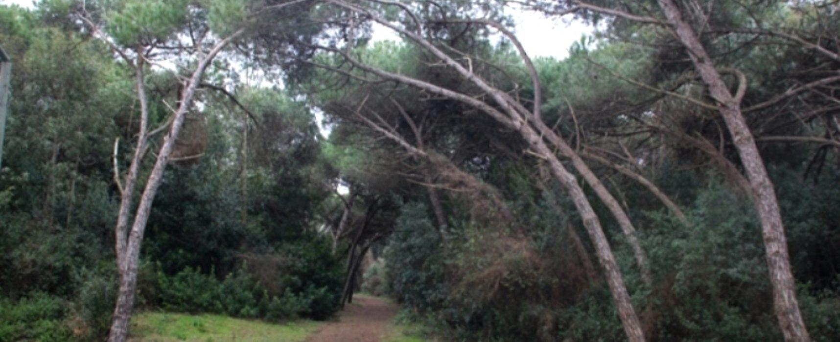 Vesuvio & Castel Volturno le foreste da riscoprire