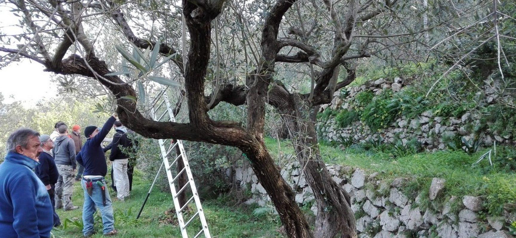 EVO, A Capri a scuola di potatura