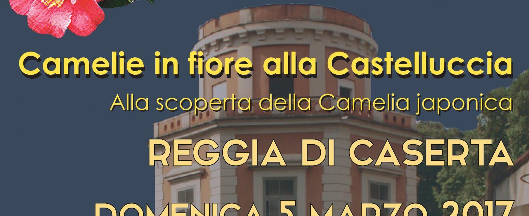 Reggia Caserta, camelie in fiore