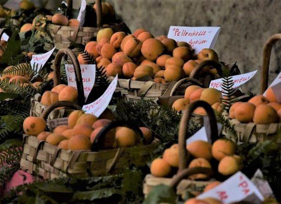 Albicocca Vesuvio, è presidio Slow Food