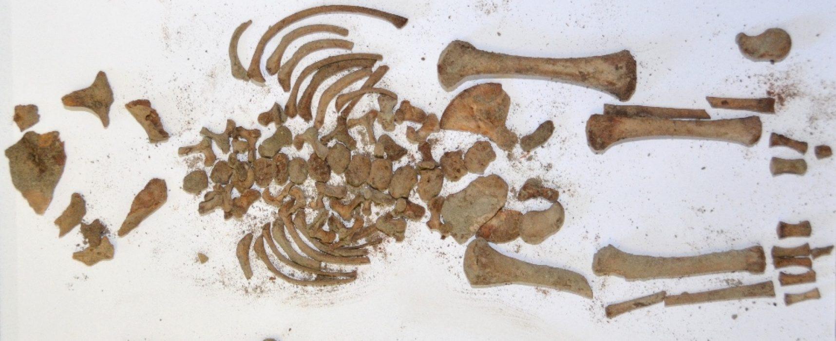 Oplontis, gli scheletri parlanti